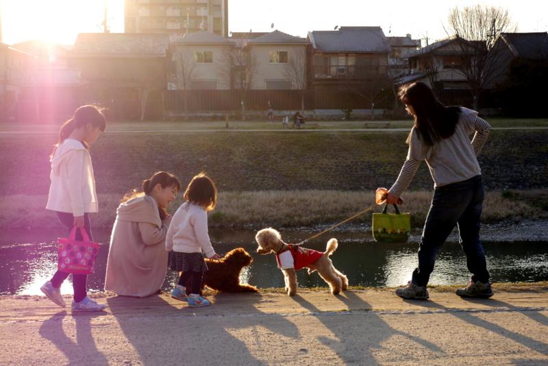 京都新聞写真コンテスト わんわん交流