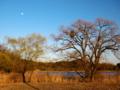 京都新聞写真コンテスト 月は東に日は西に