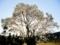 京都新聞写真コンテスト 一本白木蓮