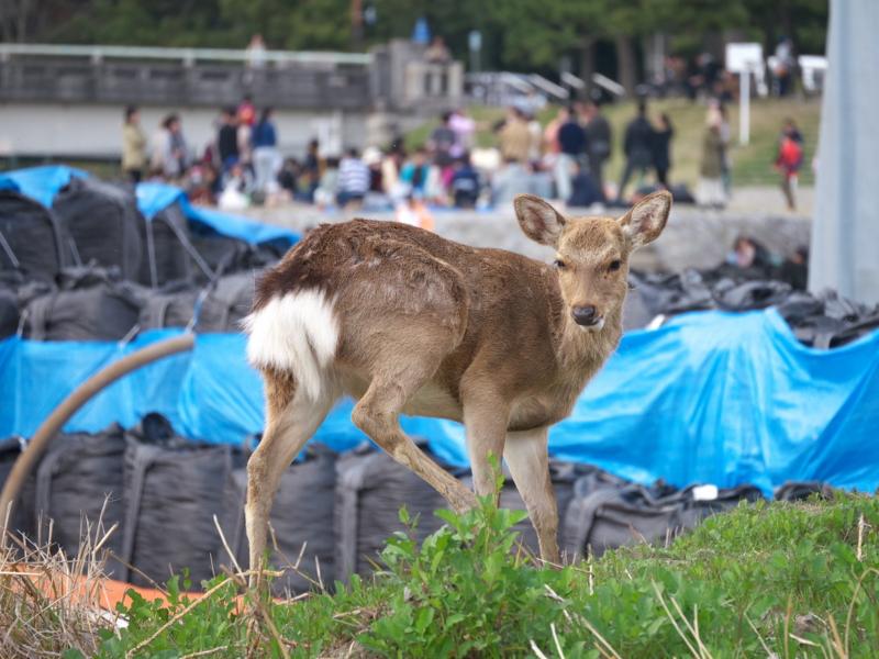 京都新聞写真コンテスト 無関心の間柄