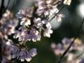 京都新聞写真コンテスト 光を透かして