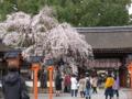 京都新聞写真コンテスト 魁て