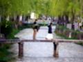 京都新聞写真コンテスト 春の白川