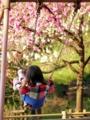 京都新聞写真コンテスト 春にとどけ