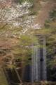 京都新聞写真コンテスト 砂防ダムも春の装い