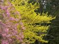 京都新聞写真コンテスト カラフルな春の装い