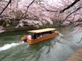 京都新聞写真コンテスト 春の舟遊び