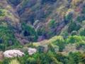 京都新聞写真コンテスト 春色のタペストリー