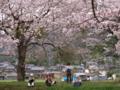 京都新聞写真コンテスト 花よりバナナ