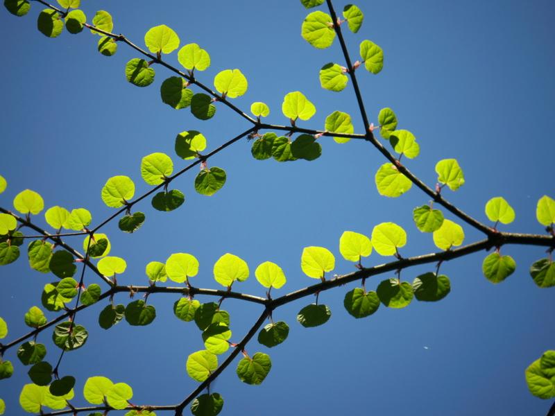 「緑のハートがいっぱい」33回京都新聞写真コンテスト佳作
