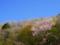 京都新聞写真コンテスト 春の山はパステルカラー