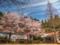 京都新聞写真コンテスト 桜咲く廃校の春