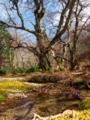 京都新聞写真コンテスト 八丁平湿原2