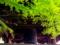 京都新聞写真コンテスト 新緑と鐘楼
