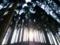京都新聞写真コンテスト 光差し込む杉林