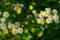 京都新聞写真コンテスト 京都御苑の花園