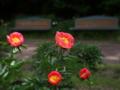 京都新聞写真コンテスト 立てば芍薬、座るはベンチ
