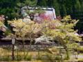京都新聞写真コンテスト 春の山里