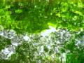 京都新聞写真コンテスト 新緑の水面