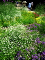 京都新聞写真コンテスト 点描画の花園