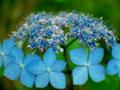 京都新聞写真コンテスト 額の花