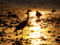 京都新聞写真コンテスト 金色に照らされて