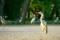 京都新聞写真コンテスト アオサギ集結