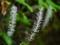 京都新聞写真コンテスト 白いブラシ