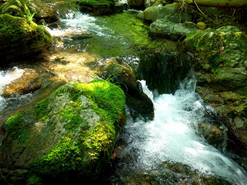 京都新聞写真コンテスト 緑と水の世界
