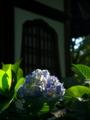 京都新聞写真コンテスト 最後の光に照らされて