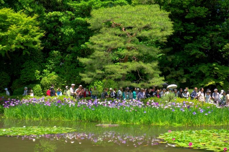 京都新聞写真コンテスト 花の数=人の数??