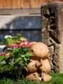 京都新聞写真コンテスト 紫陽花と背比べ