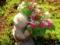 京都新聞写真コンテスト 紫陽花に寄り添って