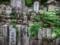 京都新聞写真コンテスト 墓石の墓場