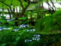 京都新聞写真コンテスト 緑の中の清涼剤