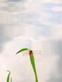 京都新聞写真コンテスト 空に向かう赤い戦闘機