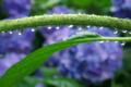 京都新聞写真コンテスト 水滴のアーチ