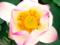 京都新聞写真コンテスト 秘密の花園
