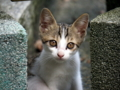 京都新聞写真コンテスト 子猫ちゃん