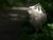 京都新聞写真コンテスト 木漏れ日に輝く