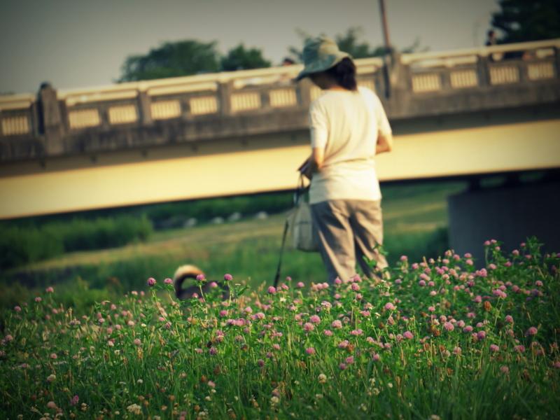 京都新聞写真コンテスト のすたるじあ