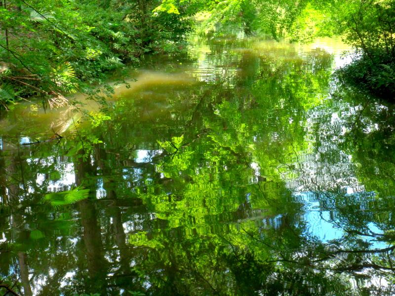 京都新聞写真コンテスト 池の中の森