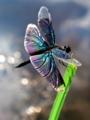 空飛ぶ宝石