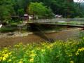 花咲く山河