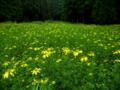 黄色の花園