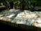 木洩れ日の古本市