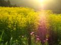 西日照る秋の花
