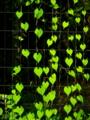 緑の葉ート