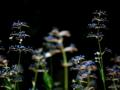 瑠璃紺の輝き
