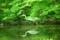 緑のハンター@植物園